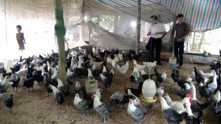 Cơ sở chăn nuôi của anh Nguyễn Văn Mừng mang lại hiệu quả kinh tế cao.
