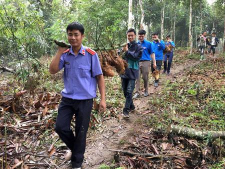 Đoàn viên thanh niên huyện Trấn Yên giúp bà con thôn Khuôn Bổ, xã Hồng Ca vận chuyển tre măng Bát độ giống.