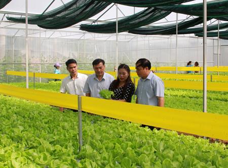 Lãnh đạo Sở Nông nghiệp và Phát triển nông thôn thăm mô hình trồng rau thủy canh tại xã Minh Bảo, thành phố Yên Bái.