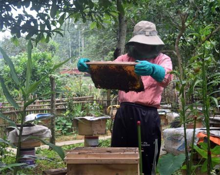 Ông Trần Đức Thắng kiểm tra đàn ong.