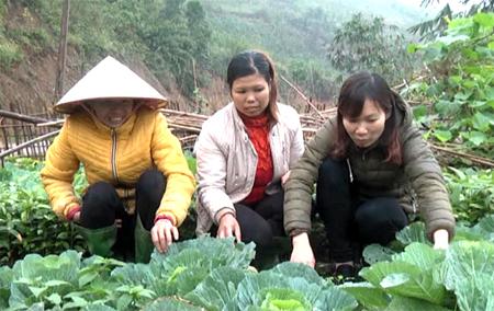 Mỗi hộ dân xã Tân Hợp đã có vườn rau an toàn tại nhà.