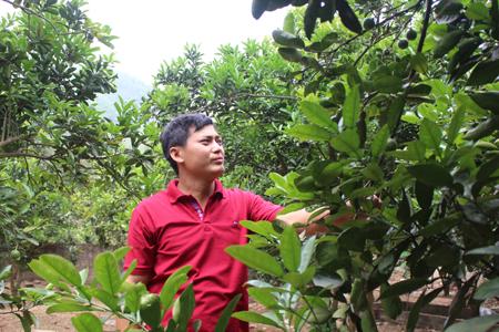 Anh Trần Mạnh Giang chăm sóc cây ăn quả.