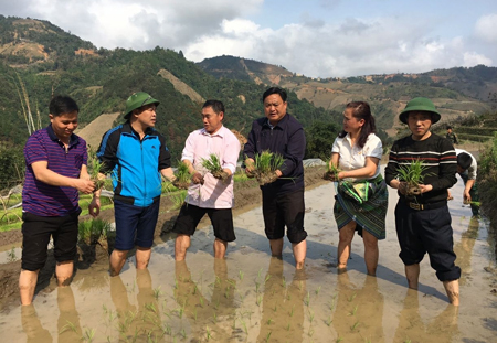 Lãnh đạo huyện Trạm Tấu xuống đồng cùng đồng bào gieo cấy lúa xuân.
