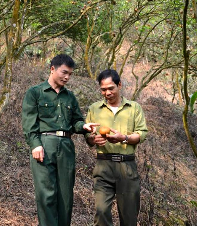 Mô hình trồng cam sành của gia đình cựu chiến binh Nguyễn Thanh Sơn ở thôn Làng Khương, xã Khánh Hòa.