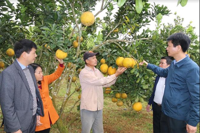 Vùng cây ăn quả ở xã Hưng Thịnh, huyện Trấn Yên mỗi năm cho thu trên 16 tỷ đồng.