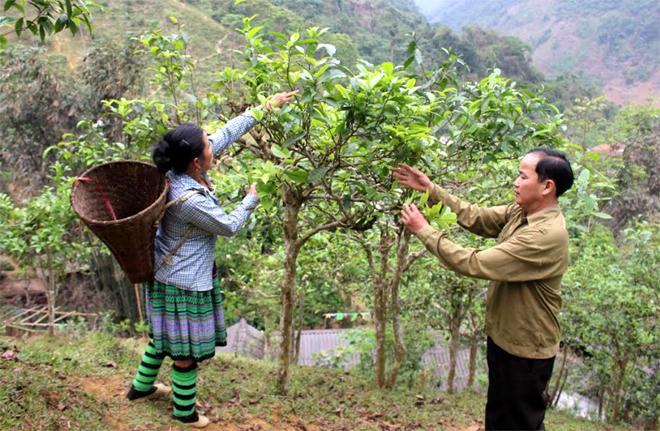 Dù còn nhiều khó khăn, vất vả song gia đình anh Vàng Sáy Tùng đã nuôi 3 người con học thành tài.