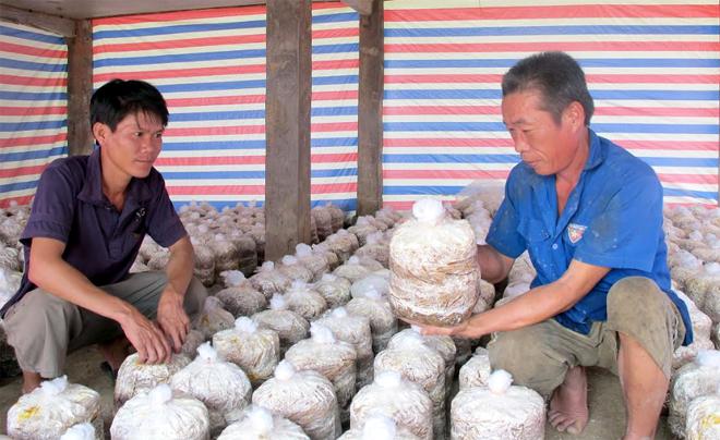 Nông dân thị xã Nghĩa Lộ trao đổi kinh nghiệm nuôi trồng nấm sò.
