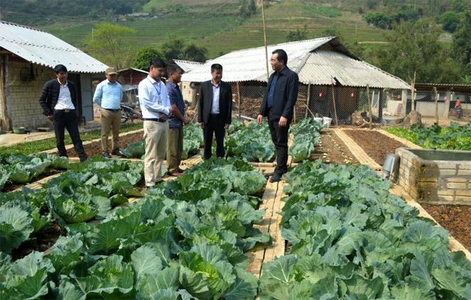 Đồng chí Nông Việt Yên - Bí thư Huyện ủy cùng lãnh đạo các ngành của huyện kiểm tra mô hình trồng rau sạch tại xã Hồ Bốn.