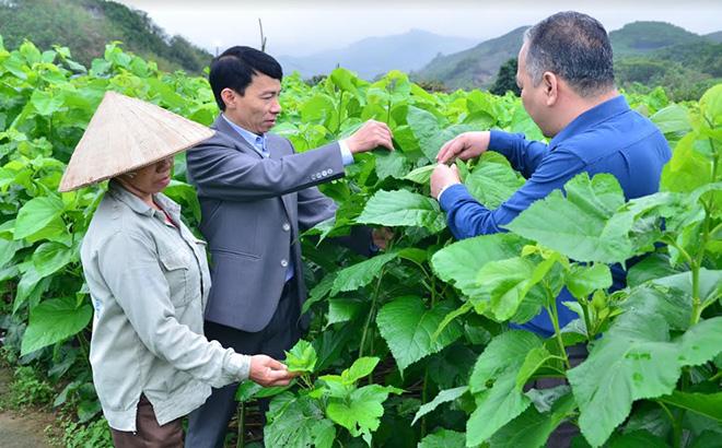 Lãnh đạo xã Đông Cuông kiểm tra mô hình trồng dâu nuôi tằm tại thôn Thác Cái.