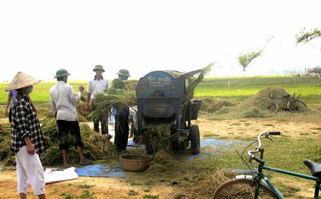 Cơ giới hóa trong thu hoạch lúa.