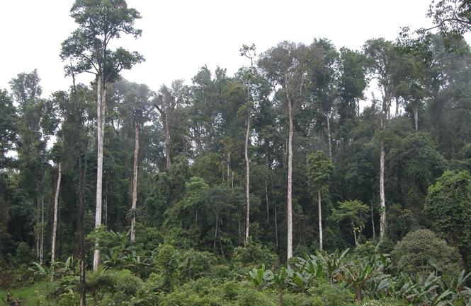 Rừng tự nhiên phòng hộ Nà Hẩu, huyện Văn Yên. (Ảnh Đức Toàn)