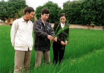 Cán bộ Phòng Nông nghiệp huyện Văn Chấn kiểm tra diện tích trồng lúa chất lượng cao tại tổ 3B, thị trấn Nông trường Nghĩa Lộ. (Ảnh: Đức Toàn)