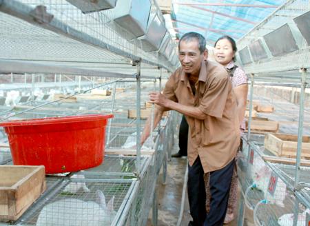 Với 400 thỏ sinh sản, trung bình cứ 3 tháng đàn thỏ của gia đình ông Hiên tăng lên khoảng 2.000 con.