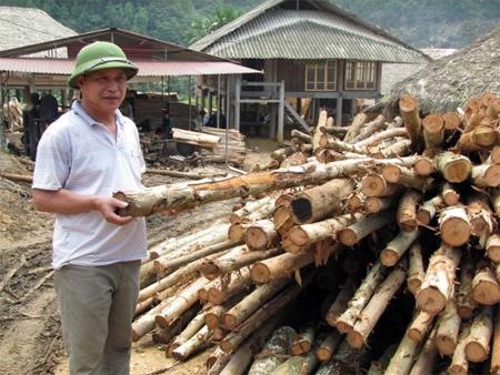 Nguyên liệu tại chỗ dồi dào nên xưởng gỗ bóc của ông Thành sản xuất khá ổn định.