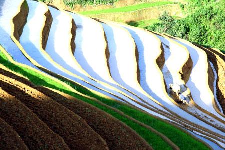 Ruộng bậc thang Mù Cang Chải mùa nước đổ.  (Ảnh: Thanh Miền)