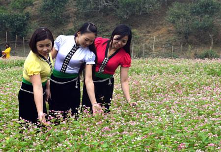 Du khách thích thú trước vườn hoa tam giác mạch tại Suối Giàng (Văn Chấn).