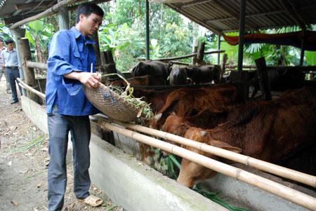 Người dân xã Vĩnh Lạc xây dựng chuồng trại chăn nuôi gia súc xa khu vực nhà ở.