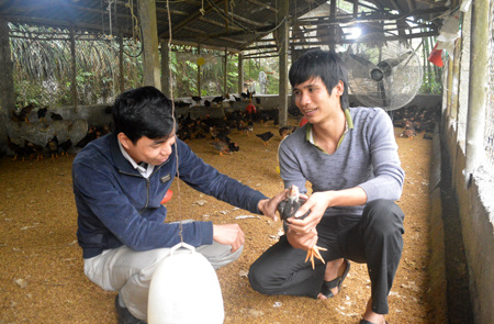 Hoàng Huy Tuấn (bên phải) trao đổi kỹ thuật chăn nuôi gà với kỹ sư chăn nuôi của Phòng Nông nghiệp huyện Trấn Yên.