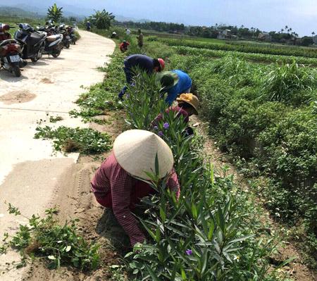 Các hội viên Hội Phụ nữ xã Tuy Lộc (thành phố Yên Bái) tham gia trồng hoa hai bên đường liên thôn.