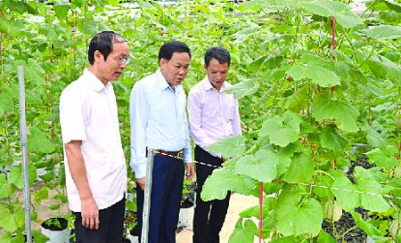 Đồng chí Nguyễn Văn Khánh - Phó Chủ tịch UBND tỉnh (đứng giữa), đồng chí Vũ Xuân Hợi - Giám đốc Sở Khoa học và Công nghệ kiểm tra mô hình trồng dưa công nghệ cao tại xã Âu Lâu, thành phố Yên Bái.