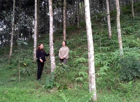 Chị Nguyễn Thị Cậy (bên phải) trao đổi kinh nghiệm phát triển kinh tế đồi rừng.