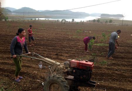 Chị Nông Thị Quy cùng gia đình làm đất trồng màu trên diện tích đất dưới cốt 58 hồ Thác Bà.