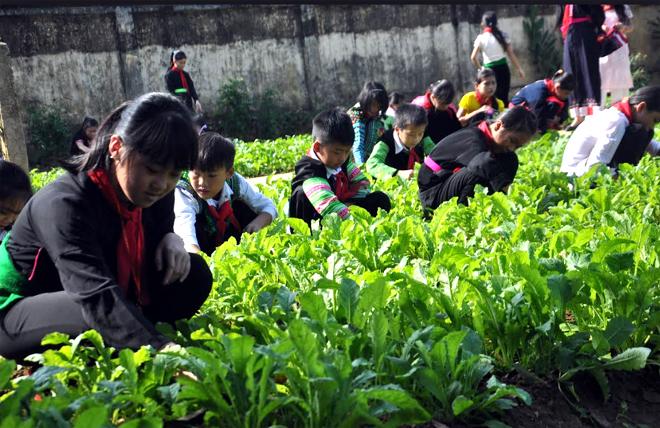 """Học sinh Trường Phổ thông Dân tộc nội trú THCS huyện Văn Chấn chăm sóc Mô hình """"Vườn rau sạch của em"""