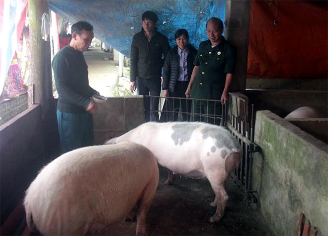 Nhiều gia đình hội viên ở Hán Đà chăn nuôi lợn có thu nhập gần 100 triệu đồng/năm.