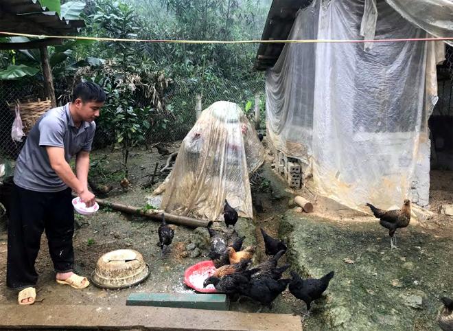Mô hình nuôi gà đen bản địa của anh Cháng A Vàng tại thôn Khuôn Bổ, xã Hồng Ca.
