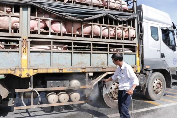 Cán bộ thú y phun thuốc tiêu độc, sát trùng phương tiện vận chuyển lợn.