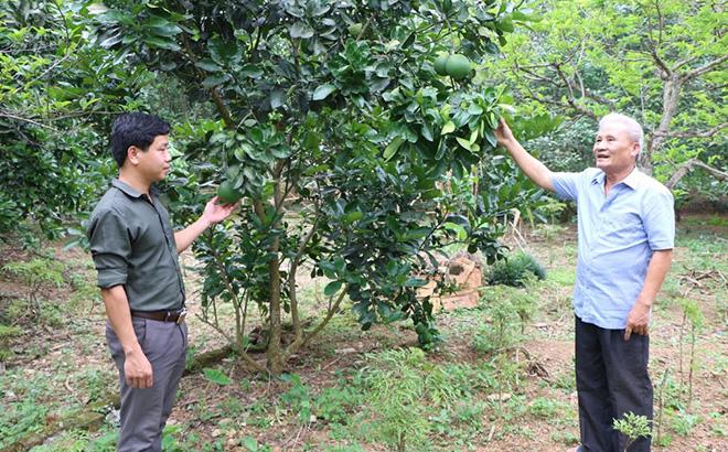 Ông Nguyễn Văn Dựng - người tiên phong mang giống cây ăn quả có múi về thôn Hồng Hà, xã Nga Quán và vận động nhân dân cùng phát triển kinh tế.