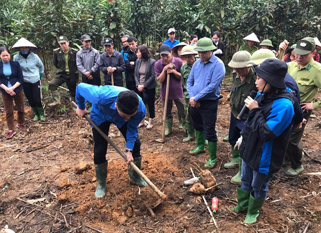 Agricultural promotion workers guide farmers in Hung Khanh commune in cultivation technique for Bat Do bamboo.