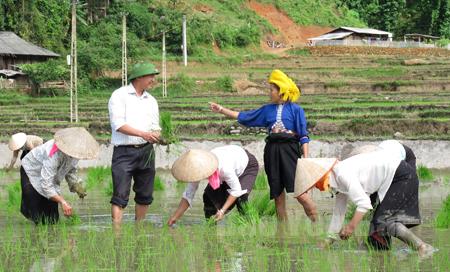 Lãnh đạo xã Hát Lừu kiểm tra, động viên người dân lao động sản xuất, chuyển đổi cơ cấu giống lúa để xóa đói giảm nghèo. (Ảnh: Thanh Hương)