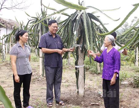 Bí thư Đảng ủy, Chủ tịch UBND xã Minh Quân – Lê Đức Bắc trao đổi với bà con về cách chăm sóc cây thanh long ruột đỏ tại địa phương.