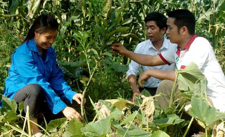 Chị Vui chia sẻ cách chăm sóc bưởi da xanh với cán bộ Đoàn Thanh niên xã Đại Đồng.