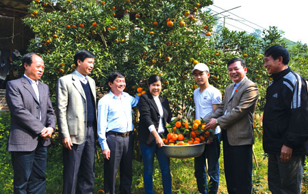Đồng chí Dương Văn Thống - Phó bí thư Thường trực Tỉnh uỷ, Trưởng đoàn đại biểu Quốc hội khóa XIV tỉnh Yên Bái (thứ hai bên phải) cùng lãnh đạo huyện Văn Chấn thăm mô hình trồng cam ở xã Thượng Bằng La.