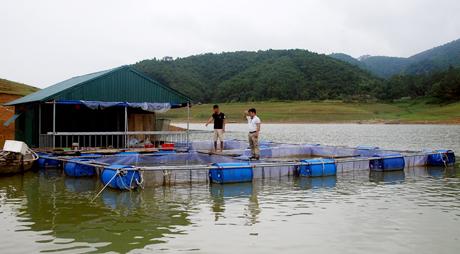 Nông dân xã Phúc Ninh nuôi cá lồng trên hồ Thác Bà.