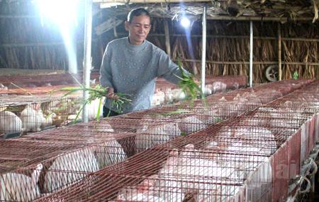 Một trang trại nuôi thỏ Newzealand.