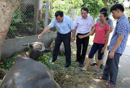Lãnh đạo Sở Nông nghiệp và Phát triển Nông thôn (đứng giữa) cùng cơ quan chuyên môn kiểm tra dịch LMLM trên đàn trâu tại xã Tân Lĩnh, huyện Lục Yên.
