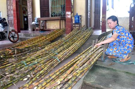 Chị Nguyễn Thị Tuyết Nhung bó mía chuẩn bị đi bán.