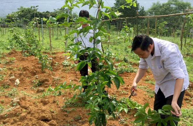 Người dân thôn Nông Trường, xã Thượng Bằng La đưa cây chanh leo vào trồng thử nghiệm.