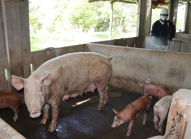 Phun hóa chất tiêu độc, khử trùng phòng chống dịch bệnh tả lợn châu Phi.