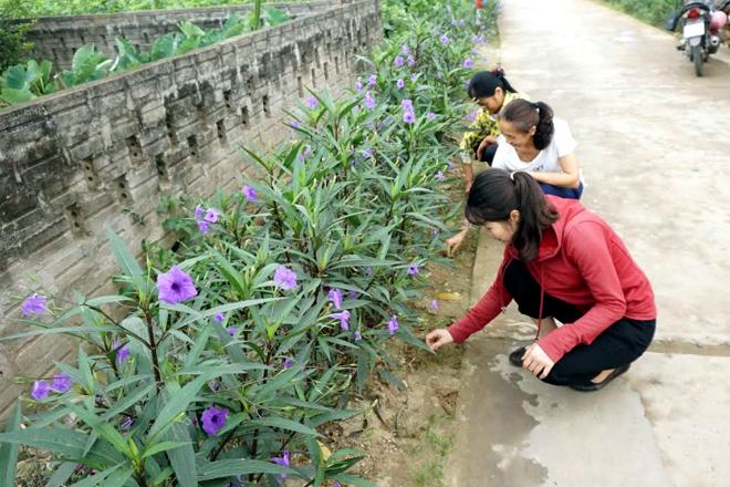 Tuyến đường hoa của xã Báo Đáp (Trấn Yên) được hội viên phụ nữ xã tích cực chăm sóc.