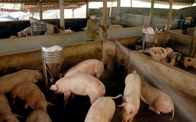 Giá thịt lợn hiện vẫn chưa có dấu hiệu dừng lại.