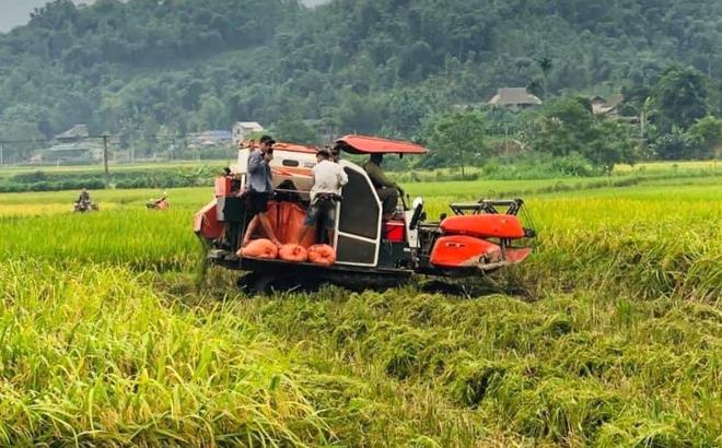 Nông dân huyện Trấn Yên đưa cơ giới hóa vào thu hoạch lúa xuân.