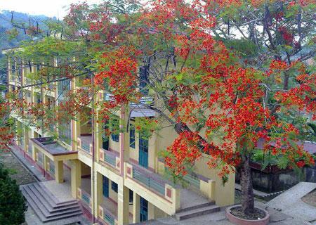 Một góc Trường THPT Văn Chấn.