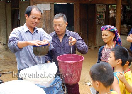 Ông Triệu Viết Ngoày (thứ hai từ trái sang) là người có uy tín ở thôn Ngòi Mấy, xã Bảo Ái (Yên Bình) thường xuyên cùng với cấp uỷ, chính quyền cơ sở vận động nhân dân lao động sản xuất, phát triển kinh tế địa phương.