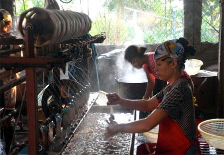 Xã Việt Thành khuyến khích nhân dân đầu tư trồng dâu nuôi tằm và chế biến kén tằm.