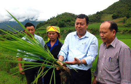 Đồng chí Vũ Tiến Đức – Phó Bí thư Huyện ủy, Chủ tịch UBND huyện Mù Cang Chải (thứ ba, trái sang) cùng lãnh đạo Phòng Nông nghiệp và PTNT huyện và lãnh đạo xã Nậm Khắt thăm đồng ruộng của bà con nhân dân tại xã Nậm Khắt.