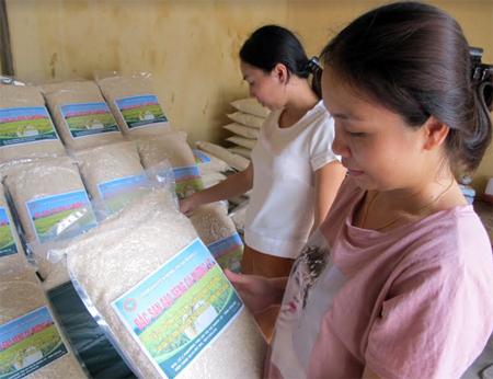 Người tiêu dùng tìm mua gạo Séng cù nguyên chủng tại cửa hàng giới thiệu sản phẩm của Trạm Khuyến nông thị xã Nghĩa Lộ.